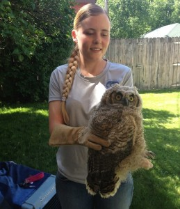 Baby great horned owl at Keokee offices with Blake Schiöberg of Birds of Prey Northwest
